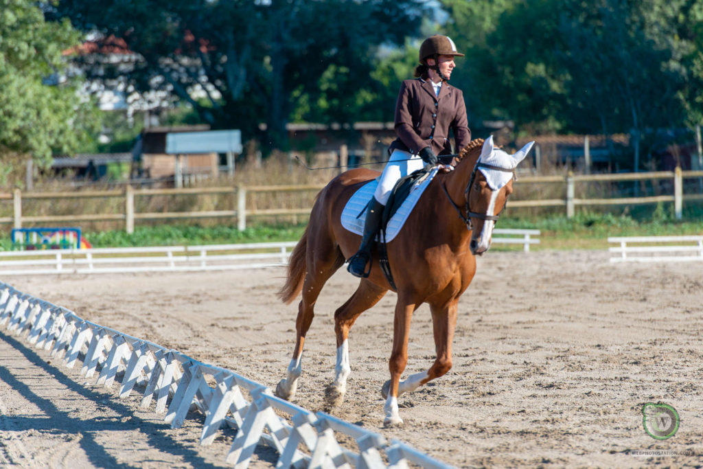 formation equestre BPJEPS