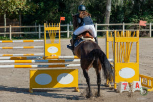 Saut d'obstacles formation BPJEPSequestre